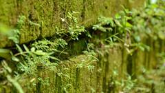 ... The green Wall ... (wolli s) Tags: bali ubud green wall indonesien id nikon d7100