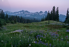 Hazy sunset. Paradise (Laura Jacobsen) Tags: hiking mountains mtrainier mtrainiernationalpark nationalparks paradise volcanoes washington wildflowers