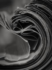 enroulé 2 de 2 (cjuliecmoi) Tags: noiretblanc blackandwhite macrophotography macrophotographie macro