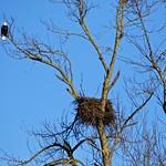 Nesting Season................ thumbnail