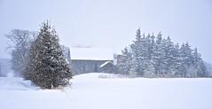 snowing in the country (tonnycdl) Tags: rural country barn snowing