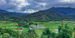 IMG_6930 (imagehawaii) Tags: portfolio wessanddevonaweddingportfoliohawaii princeville hawaii unitedstates us