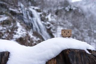 *** Danbo in Snow ***
