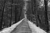 Salisbury Point Ghost Trail (ewan.osullivan) Tags: bw path snow salisburypointghosttrail railtrail salisbury pathscaminhos paths trees blackandwhite monochrome perspective