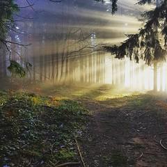 Wake up the sun (MARTIN FRED) Tags: soleillevant forest forêt nikon d800 nikon70200f28 rhonealpes rhônealpesauvergne aurore goldenhoursunset sunset soleil rayon amazing wildlife nature landscape gold wood lensfx sol france sunrise lovenature amazon