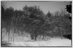 Kreuzberg-6 (conrad.seegers) Tags: bomen bos sneeuw fransizkaner klosterbier bier keuzberg monastery klooster schnee wald baum park landschaft landstras