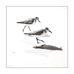 un deux un ,... (Hélène Baudart) Tags: highkey mouettes plage mer mexique nb