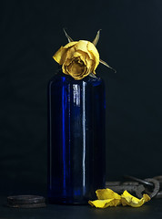 Withering (Jackx001) Tags: withering stilllife flower indoors jack nobre jacknobre photography art yellow blue toronto ontario canada simple light