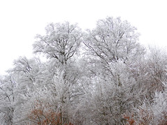 Winterlicher Rotbuchenwald (anubishubi) Tags: wald winter buchenwald raureif bäume trees forest beech lumixfz150