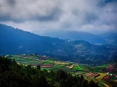Poomparai. (Prabhu B Doss) Tags: prabhubdoss terrace farm terracefarm village hillstation hills westernghats rice paddy kodaikanal kodai landscape clouds tamilnadu india incredibleindia