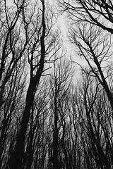 Dark Woods Abberley Hill (johntibbetts@tiscali.co.uk) Tags: worcestershire abberley woodland