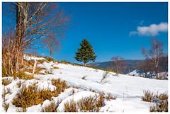 Sapin des Vosges (Pascale_seg) Tags: landscape paysage mountain montagne vosges labresse france nikon neige snow winter hiver tree sky cloud sapin abigfave