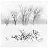 _DSC3664 (gillesporlier) Tags: trees tree nikon d750 paysage landscape noiretblanc blackandwhite monochrome winter hiver saison snow