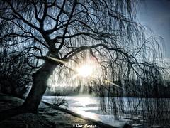 Zamarznięte jezioro (Gut Porter Foto Art) Tags: park lód zima zamarznięty mróz staw warszawa