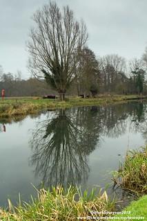 Bure Tree Reflection