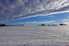 Des traces dans la neige (Diegojack) Tags: echandens vaud hiver froid neige glace paysages campagne traces