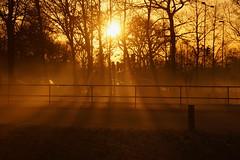 Rays of sunlight (Steenjep) Tags: sunset solnedgang sol himmel sun sky cloudy stråler ray tree træ rækværk skygge shadow