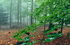2511  Niebla en Sta Fe del Montseny, Barcelona (Ricard Gabarrús) Tags: paisaje niebla plantas jardin rural lluvia ricardgabarrus olympus ricgaba