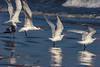 _MG_3919.jpg (nbowmanaz) Tags: birds southweststates animals unitedstates texas places padreisland