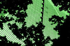 Out of forest (woolgarphilippe) Tags: arbres tree trees building édifice edificio moderne vert green verde dream rêve sueno sciencefiction bladerunner futur future futuro gratteciel skyscraper miami