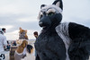 DSC02274 (Kory / Leo Nardo) Tags: fur furry fursuit fursuiting costume cosplay animal fursona space camp party alameda faction brewing 12118 pupleo thebayareafurries