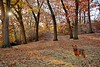 Well Appointed in Fall Colors (n.e.janey) Tags: autumn fall warmcolors autumncolors autumndog landscape doglandscape canine