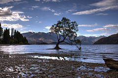 The Wanaka Tree (Kevin_Jeffries) Tags: lakewanaka lake tree thewanakatree southernlakes southisland newzealand landscape water