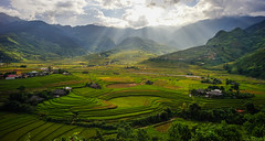 Terraced rice field in Northern Vietnam (phuong.sg@gmail.com) Tags: agriculture asia asian bali cambodia china control county curve earth ecology environment farm field food green ground grows horticulture indochina japan land landscape laos leaf local malaysia management mountain myanmar nature patchwork plant plantation regulation rice rough saigon sapa soil system terrace thailand travel valley vietnam