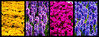 Keukenhof 28 March 2017-0728-Edit.jpg (JamesPDeans.co.uk) Tags: landscape flowers plants nature prints for sale garden digital downloads licence colour keukenhof netherlands wwwjamespdeanscouk man who has everything purple park landscapeforwalls europe gardens james p deans photography digitaldownloadsforlicence jamespdeansphotography printsforsale forthemanwhohaseverything