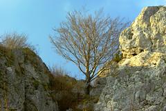 340  I grow on a rocky ground (Hejma (+/- 5400 faves and 1,7 milion views)) Tags: skały wapienne drzewa krzewy ciemne chmury światłocień