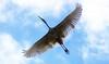 Wings (na_photographs) Tags: bird wings sky fly flying fliegen vogel federn flügel wing