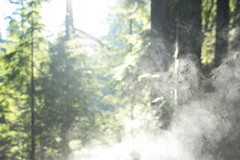 Steamy Forest Sunshine (Rebecca Haranczak) Tags: vancouver travel pnw pacificnorthwest nature capilano steam fog weather forest sony sonya7r sonyalpha winter february gmaster color