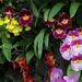 flowers longwood feb 2018