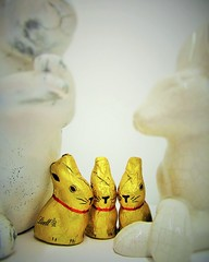 """Bunny Love"" (seanwalsh4) Tags: goldenbunnies fun laugh humour 7dwf wednesdaysmacroorcloseup easteriscomming love caring parents nature chocolate yummy rabbits"