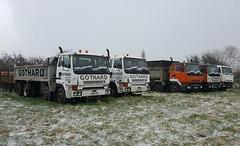 Gothard Fleet (Reiver RE229) Tags: leyland constructor gothard tipper hell drivers