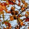 Sonbahar renkleri. (@ tameristan) Tags: autumn autumnleaves autumncolors leaf leafs sky brown yellow blue tameristan nikonphotography nikon nikona900 nikoncoolpixa900 winter sunlight sun shadow tree nature lifeinizmir forest