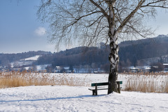Mattsee - Salzburg (Ernst_P.) Tags: aut mattsee ֳterreich salzburg see winter schnee pflanze birke baum bank schilf austria autriche österreich salesbury sigma 50mm art f14 invierno snow ice hielo neige nieve hiver tree arbol