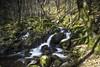 Ruisseau de Lanaud (2) (thierrycolas19) Tags: sérandon corrèze stream cascades corréze limousin