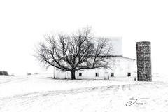"""""""Majestic Impressions"""" (The Shutter Affair) Tags: barn michigan winterscene winterscape landscape barnscape michiganbarn puremichigan blackandwhite blackandwhitephotography juliathomasphotography jthomasphotography theshutteraffair white whitebarn silo farmer westmichigan"""