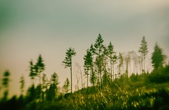 Can't see the forest for the trees (dan in real life) Tags: 2018 dmyers nikond200 lensbabycomposer sweet50 windy rainydaysdreamaway trees forest