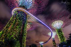 Supertree Grove (Ashley Wallace - Touchdown Aviation) Tags: clouds longexposure sky garden manmade tree travel lights supertreegrove gardensbythebay wideangle fisheye nikon flickr nightphotography night photography asia singapore