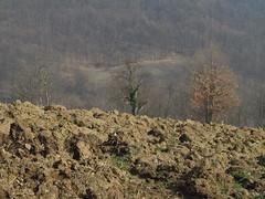 P2172289 (harrach_ba) Tags: green brown winter spring nature flowers bosna bosnia