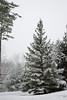 Winter's Around the Corner (JamesMac34) Tags: vermont road snowyroad corner winding trees pine pinetrees winter contrast snowstorm