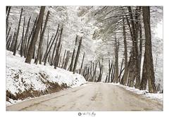 En la carretera (Art.Mary) Tags: neige blanc blanco white road chemin canon árboles trees arbres paisaje landscape paysage cumbresverdes zubia andalucía españa granada spain espagne