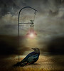Dangers at night (jaci XIII) Tags: noite pássaro perigo solitário animal ave lâmpada night bird danger solitary lamp