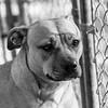 Princess14Jan201818-Edit.jpg (fredstrobel) Tags: pets animals blackandwhite dogs phototype pawsdogs decatur georgia unitedstates us
