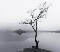The Kilchurn Tree (chrismarr82) Tags: kilchurn castle nikon scotland loch awe tree