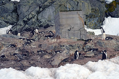 Brown_2017 12 11_3076 (HBarrison) Tags: harveybarrison hbarrison antarctica antarcticpeninsula paradiseharbor brownstation arctic antarctic arcticantarctic
