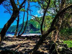 Hawaii-WaipioValley-66.jpg (Chris Finch Photography) Tags: jungle hawaiiphotography waipio taro waipiovalley hawaii landscapephotographs landscapephotography utahphotographer chrisfinch tarofarms chrisfinchphotography photographs bigisland tropical tarofarm wwwchrisfinchphotographycom valley
