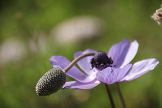 #nature_photography #spring #flower #macro #macro_photography #closeshot #photo_art #naturelovers #photographyoftheday #photo